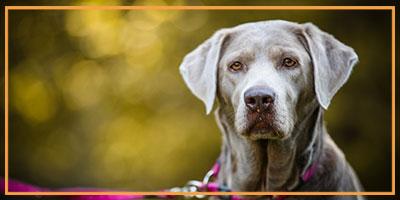 NW-Fotodesign-Tierfotografie-Hund-in-der-Natur