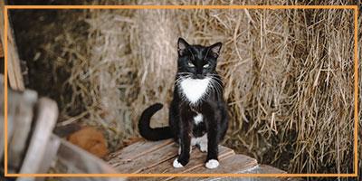 NW-Fotodesign-Tierfotografie-Katze