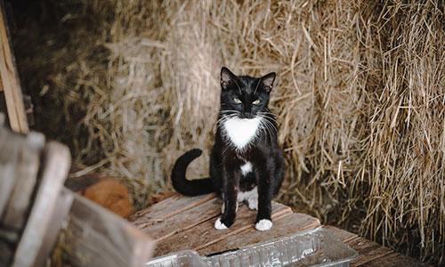 NW-Fotodesign-Tierfotografie-Katze-Bauernhof