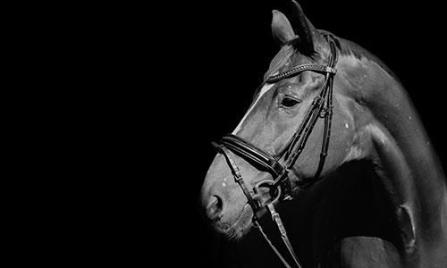 NW-Fotodesign-Tierfotografie-Pferd-in-schwarzweiss