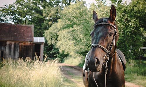 NW-Fotodesign-Tierfotografie-Pferdebilder