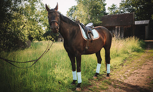 NW-Fotodesign-Tierfotografie-Pferdeshooting