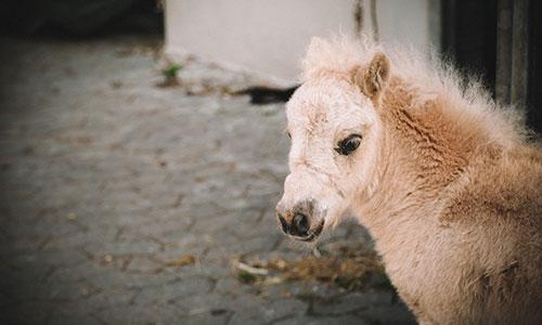 NW-Fotodesign-Tierfotografie-Pony-Bauernhof