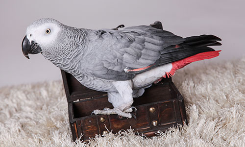 NW-Fotodesign-Tiershooting-Vogel